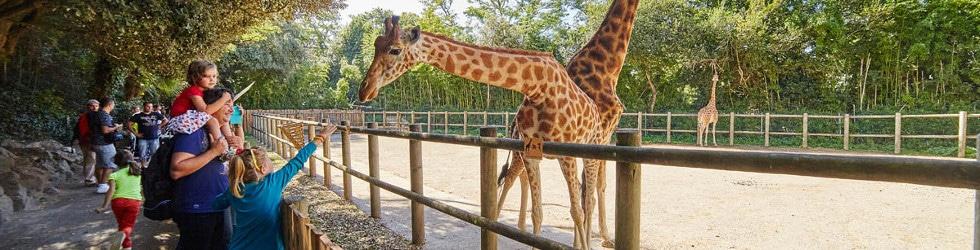 sortie enfants zoo des Sables d'Olonne